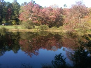 little-glade-mill-pond-with-gorgeous-reflection
