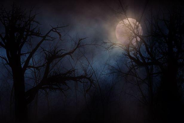 moonlightandmystery1